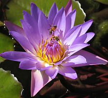 Lily and two Bees working together by Marilyn Baldey