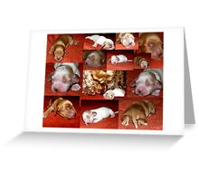 Candy is a Moomy :) Greeting Card