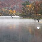 Misty Morn by NaturalBritain