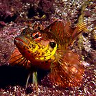 Throat-spotted blenny by George Cathcart