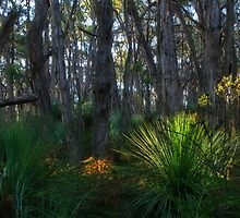 Stringy Bark Forest by FASImages