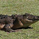 Crocodile by Jenny Brice