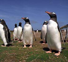 Gentoo penguins by leksele