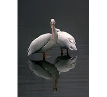 Two Cranes Photographic Print