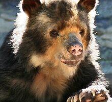 SPECKLED BEAR by mlynnd