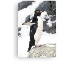 Rockhopper Penguin Canvas Print