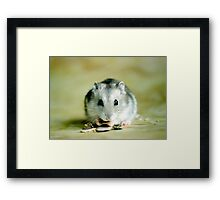 Cute Hamster Framed Print