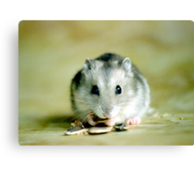 Cute Hamster Canvas Print