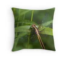 Widow Skimmer Throw Pillow