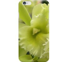 Large Green Orchid iPhone Case/Skin
