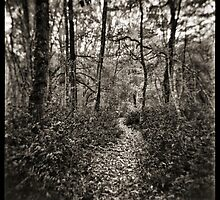 Walk in the wood by Marco Scataglini