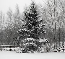 Fence line in the Snow by katpix