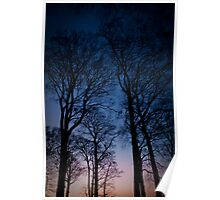 Eery trees in the morning light Poster