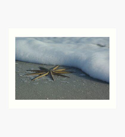 Starfish by Foam II Art Print