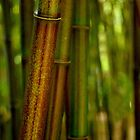 Green Bamboo by Tiffany Dryburgh