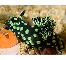 Green-Spotted Nudibranch Photographic Print