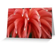 Macro Dahlia Greeting Card