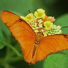 Butterfly from all my heart by loiteke