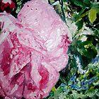 Pink Rose by Rosanna Jeffery