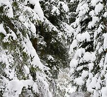 Snow Forest by Walter Quirtmair