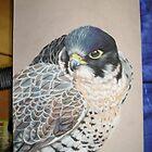 Predatory Elegance by Lyrebird