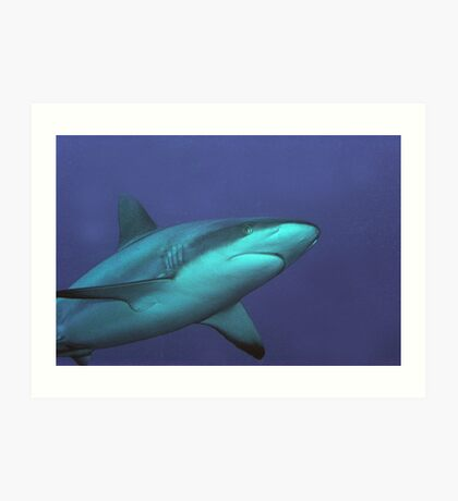 Reef Shark Art Print
