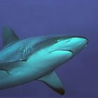 Reef Shark by Dan Sweeney
