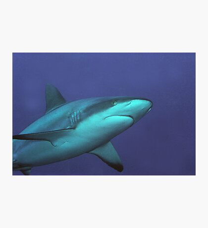 Reef Shark Photographic Print