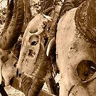 Komodo Dragon Kills by Dan Sweeney