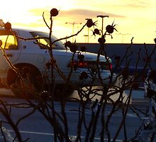 Rosehips and Taxi in Winter by murrstevens