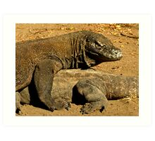 Komodo Dragons Art Print