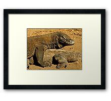 Komodo Dragons Framed Print