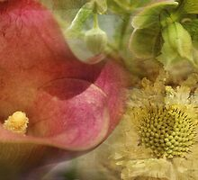 Floral Montage Series 12 by Amanda White