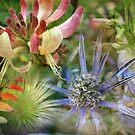 Floral Montage Series 14 by Amanda White