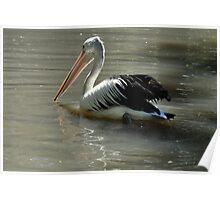 Pelican X Poster