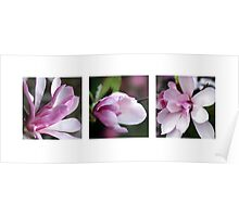 Star Magnolia Triptych Poster