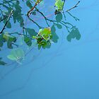 Mangrove Reflections 2 by Woodgate
