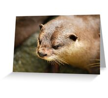 Furry Otter Greeting Card