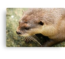 Furry Otter Canvas Print