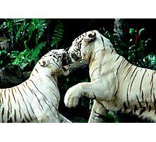 Fighting Tigers Photographic Print