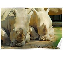 Resting Rhino Poster