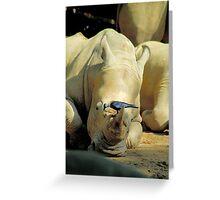 Resting Rhino Greeting Card