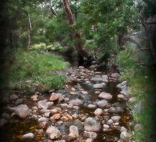 Stony Creek - Halls Gap by Jennifer Craker