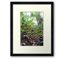 Under the Green Framed Print