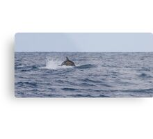 Dolphin leaping Metal Print