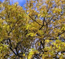 Blue Sky and Autumn Leaves Sticker