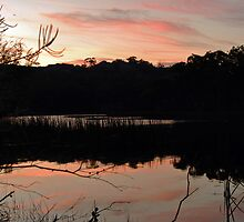 Dunns Swamp by Jonathan Stables