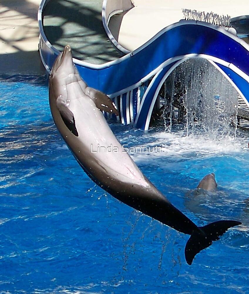Dolphin Jump 1  by Linda Sannuti
