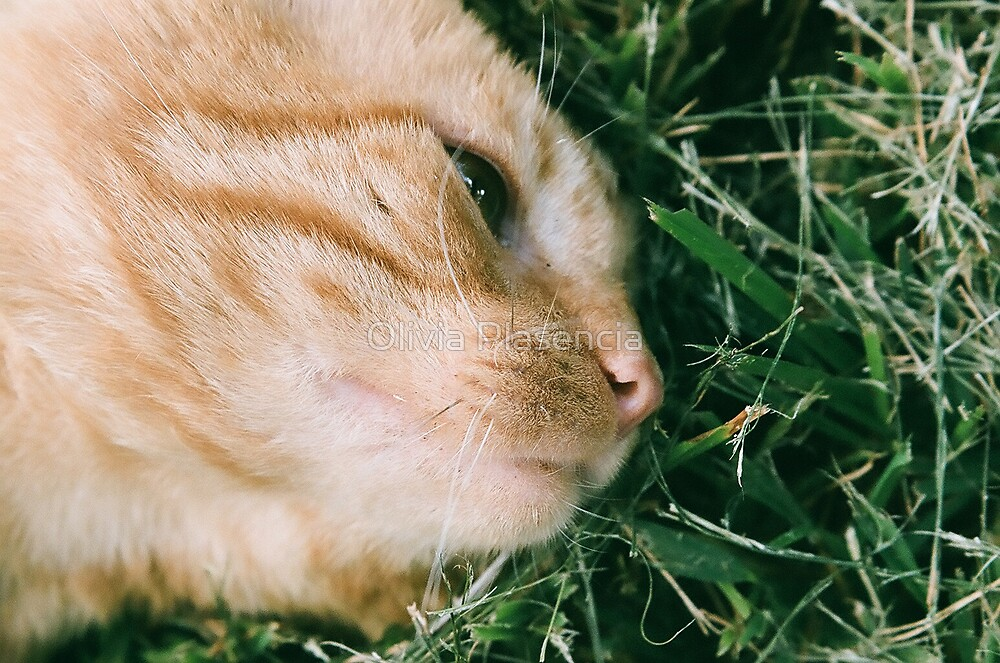 The Smell of Grass by Olivia Moore