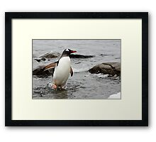 "Gentoo Penguin ~ ""Gawd it's Cold"" Framed Print"